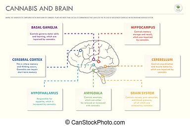 Cannabis and Brain horizontal business infographic