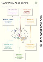 Cannabis and Brain vertical business infographic ...