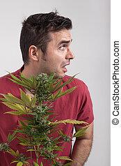cannabis, assustado, planta, homem