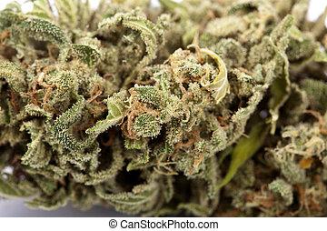 cannabis, bakgrund