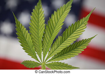 cannabis, bandeira americana, marijuana