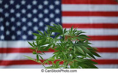cannabis, bandera, norteamericano, marijuana