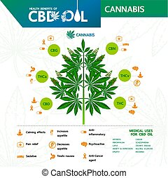 Cannabis benefits for health vector illustration.