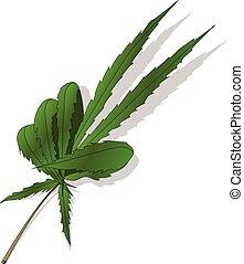 cannabis, blanc, feuille, isolé, fond