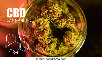 cannabis, brotes, imagen, de, fórmula, cbd, close-up., curación, marijuana, concepto