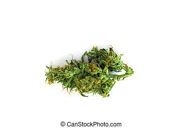 cannabis, broto, vista superior, isolado, branco, fundo