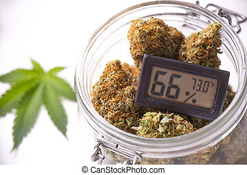 Cannabis buds on clear glass jar with humidity gauge ...