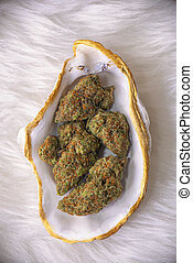 Cannabis buds (sour tangie strain) isolated on white inside...