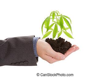 cannabis, business.