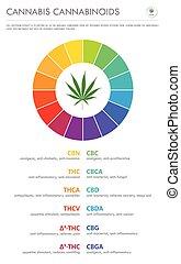 Cannabis Cannabinoids vertical business infographic