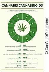 Cannabis Cannabinoids vertical infographic illustration ...