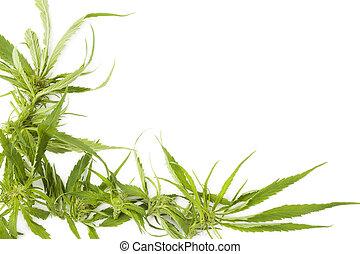 cannabis, copie, fond, space.