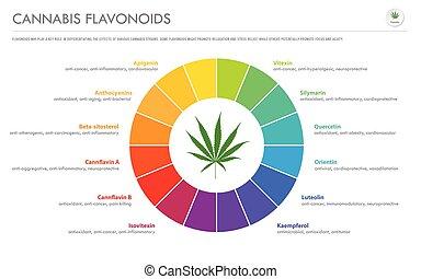 Cannabis Flavonoids horizontal business infographic
