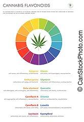 Cannabis Flavonoids vertical business infographic