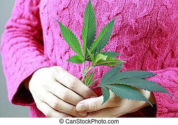 cannabis), folha, segurando, (, marijuana, verde, fêmea passa, fresco, cânhamo, plant.
