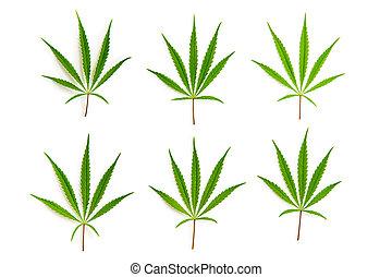 cannabis, folhas, marijuana