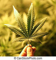 cannabis, fond