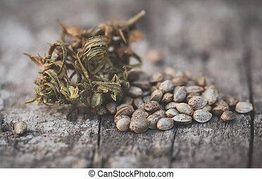 cannabis, hennep, zaden, of