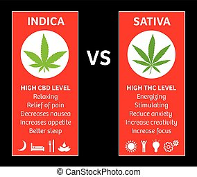 cannabis indica and sativa strains species information ...