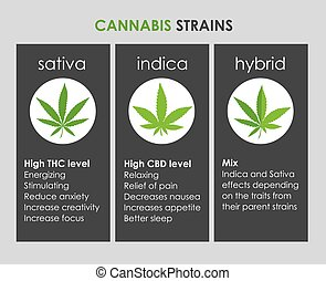 cannabis indica and sativa strains species information...