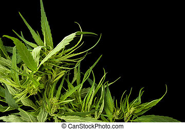 cannabis, kopie, achtergrond, space.