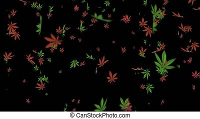 Cannabis leaves falling Beautiful composition Realistic 3D Alpha channel loop Animation. Marijuana Leaf on green screen. recreational drugs and Marijuana, weed, herb, leaf, ganja, sativa, joints