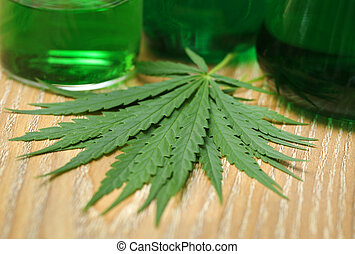 Cannabis leaves in laboratory