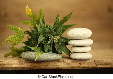cannabis, médico, óleo, produto, cbd