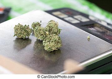 cannabis, marijuana, brotes