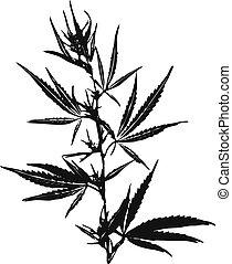 cannabis, -, marijuana, ilustração, folhas