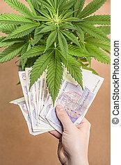 cannabis, negócio