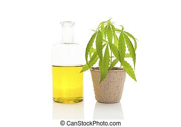 cannabis, oil.