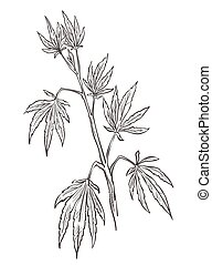 Cannabis plant, medical marijuana with leaves monochrome sketch