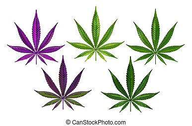 Realistically drawn green and purple hemp leaves on white background. Cannabis.