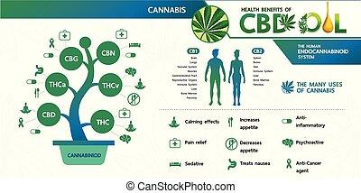 cannabis, saúde, benefícios, vector.