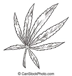 Cannabis sketch, medical marijuana herbal plant with leaves