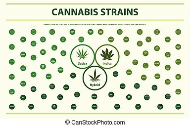 Cannabis Strains horizontal infographic illustration about ...