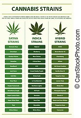 Cannabis Strains vertical infographic illustration about ...