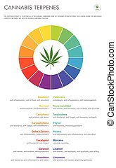 Cannabis Terpenes vertical business infographic illustration...