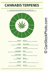Cannabis Terpenes vertical infographic illustration about ...