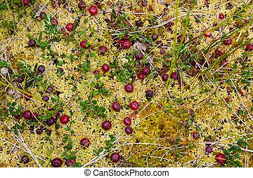 Champignon mousse - Mousse dans les urines ...