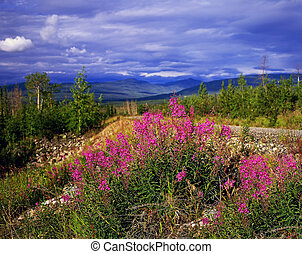 Canol Highway, Northwest Territories, Canada