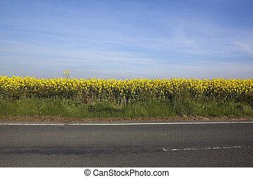 canola, à margem estrada