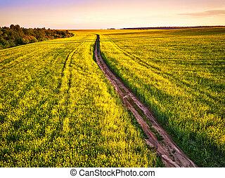 canola, 土, 春, sunrise., フィールド, 花が咲く, 道