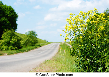 Canola by road