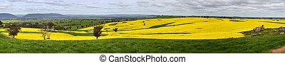 Canola farmlands Scenic Vista