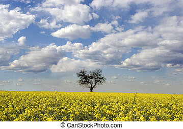 a canola field and a tree