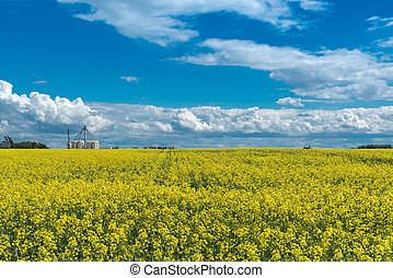 Canola field in bloom and a deer jumping through it with a fertilizer plant in background