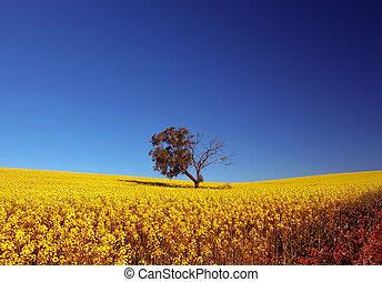 Canola Field - Tree in Canola Field