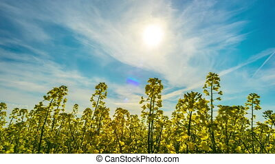 Canola field, time-lapse with slider
